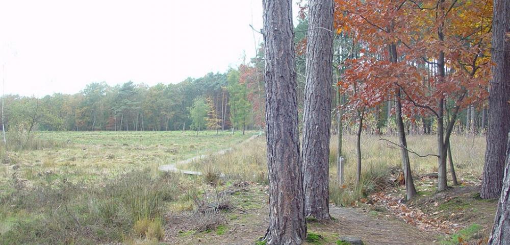 prairie, arbres, forêt