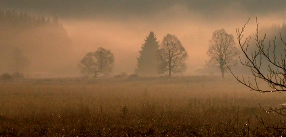 landschap, bomen, mist
