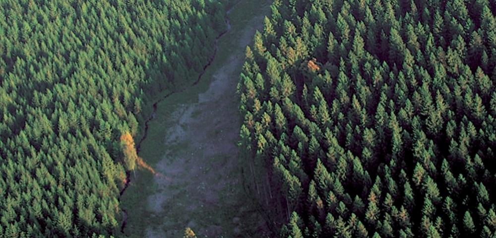 arbres, forêt, chemin