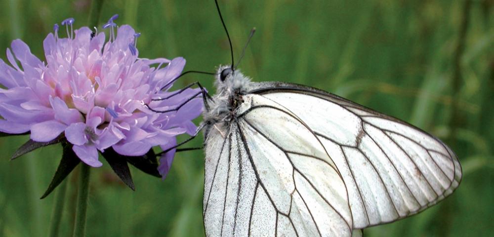 vlinder, bloem, paars, gras