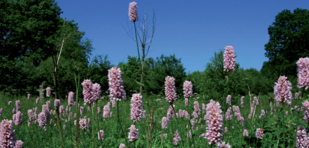 prairie, herbe, arbres, fleurs