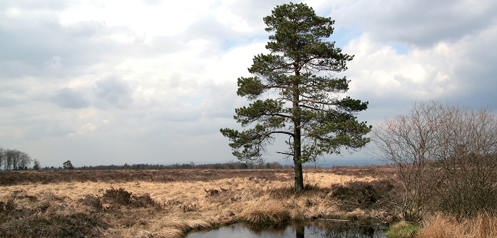 eau, arbres, paysage