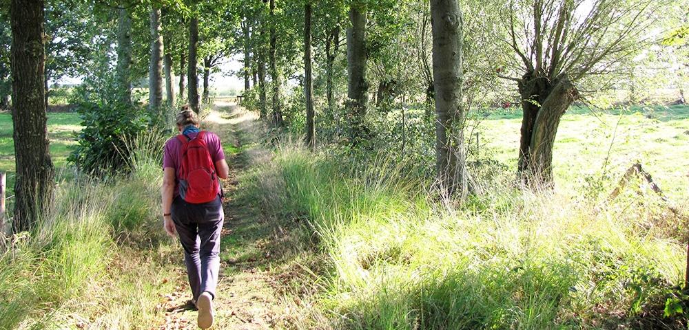promeneur, forêt, arbres, herbe