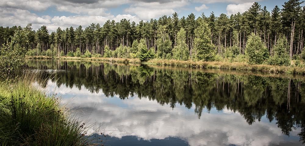 eau, arbres, forêt