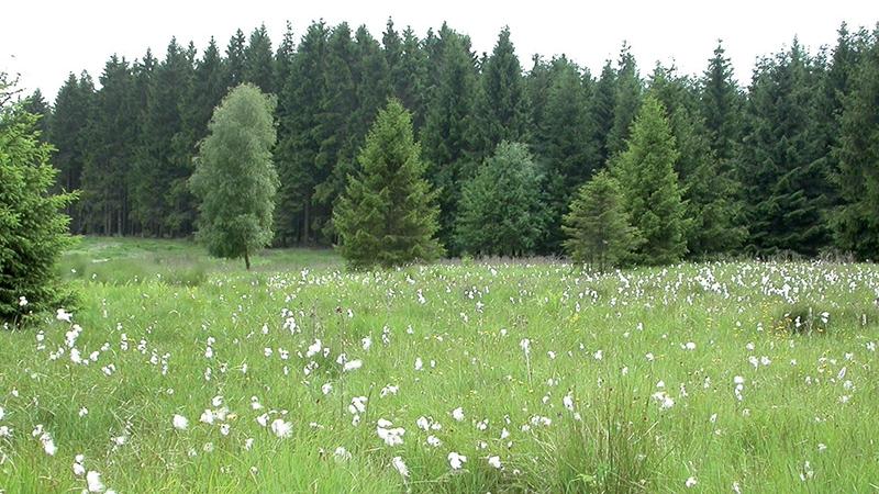 bomen, bos, weide, groen, natuur