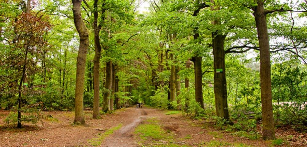 arbres, forêt, vert, chemin