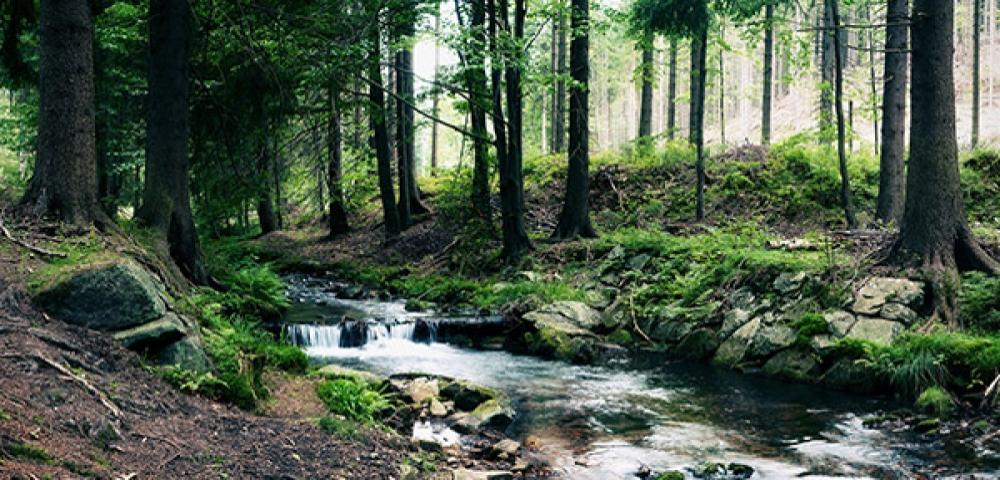 Bos, bomen, rivier