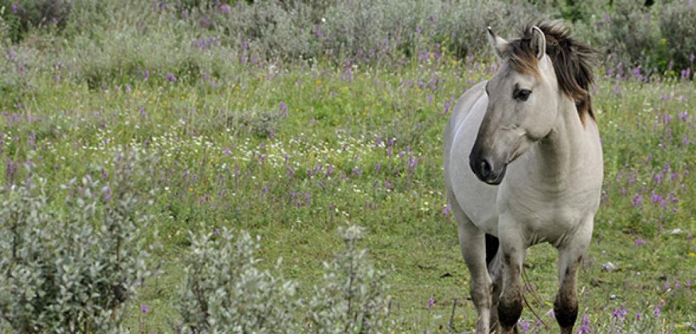 prairie, herbe, cheval
