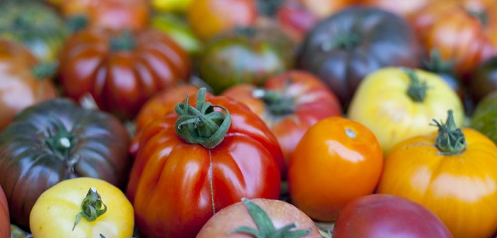 tomate, tomate rouge, tomate jaune, tomate verte