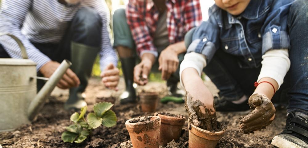 tuinieren, planten, pot, accessoires